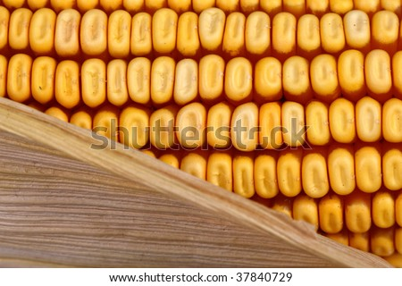 classic corncob vegetable,fine nature  detail background