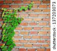 Climbing fix tree on brick wall. - stock photo
