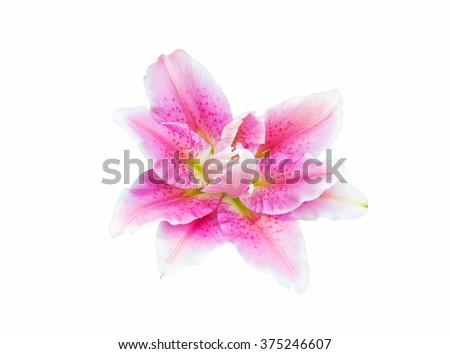 Jardinería: Lily of the Valley   Martha Stewart
