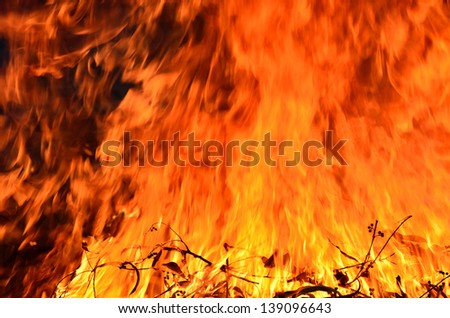 close up burning fire with plant