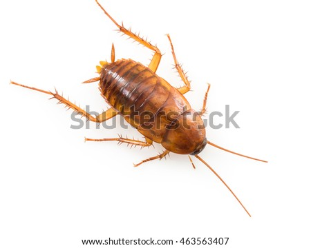 Close up dead cockroach isolated on white background
