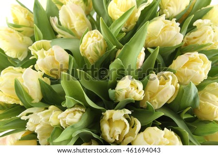Close-up of a beautiful bouquet of white tulips. Background
