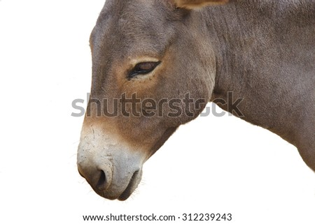 Close up of a donkey head isolated on white background