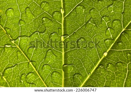 Close up of a green leaf with raindrops background