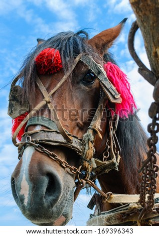 close-up of a horse's head tied up in the countryside