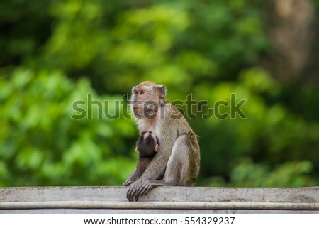 Close-up of a Monkey, monkey forest in thailand