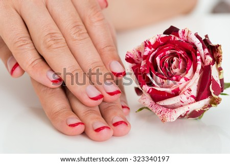 Close-up Of Beautiful Female Hands With Red Nail Varnish Near The Rose