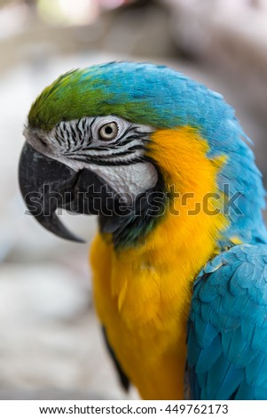 Close up of blue yellow macaw parrot
