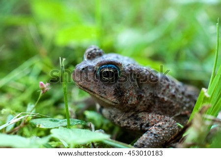 Close up of brown toad in green grass