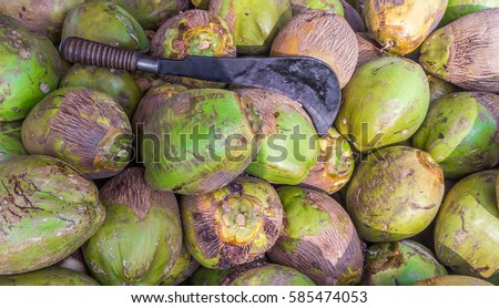 Betel Nut Put On Ground Drying Stock Photo 143018458 ...