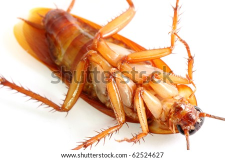 Close up of cockroach, but it was die.