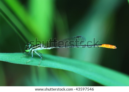 Close up of damselfly resting on leaf