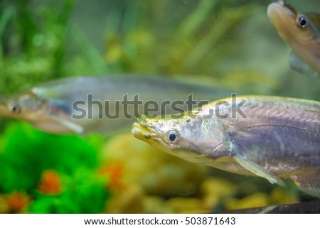 Close up of fishes in aquarium.