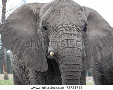 close up of head of male elephant