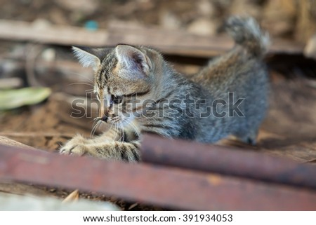 Close up of lovely Thai small kitten sitting