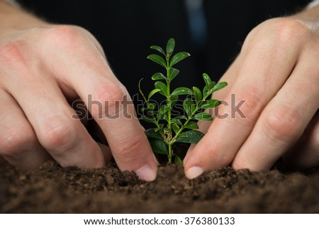 Close-up Of Person Hand Planting Small Tree On Ground
