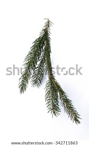 Close up of Pine needles isolated on a white background