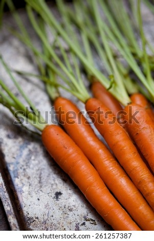 Close Up of Raw Carrots in a Bunch with Stems