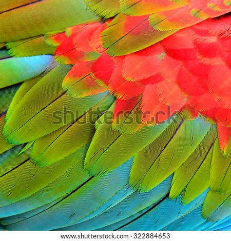 Close up of Red Green and Blue background taken from Green-winged Macaw bird's feathers and texture
