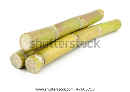 Close up of sugar cane in isolated white background