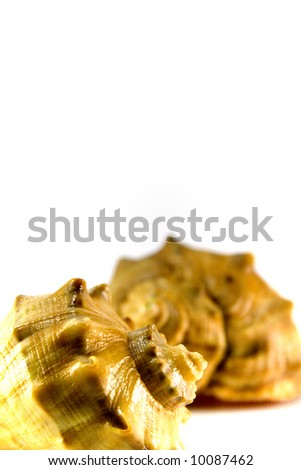 close-up of two shells over white