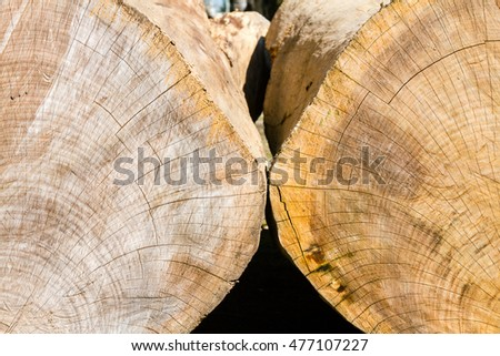 Close-up of two tree trunk cut with sawing marks
