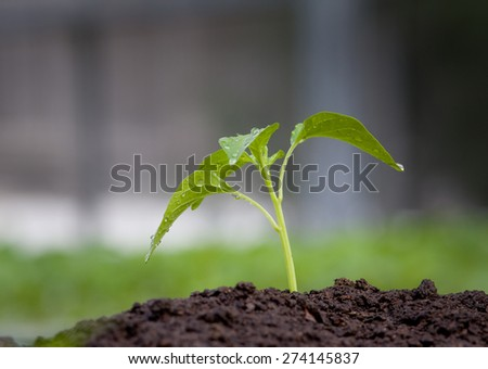 Close up of young plant growing from fertile soil