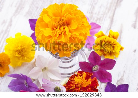 Close up photo of the small light orange flowers (Tagetes) on a bright solid wooden background.