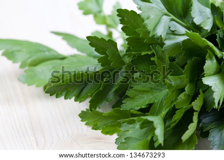 close up picture of fresh parsley