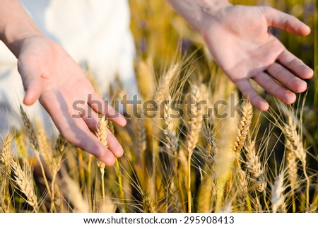 Close up picture on hands with wheat on sunny day outdoors background