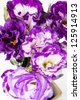close up violet lisianthus flower - stock photo