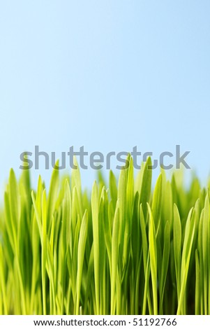 close-ups of green grass