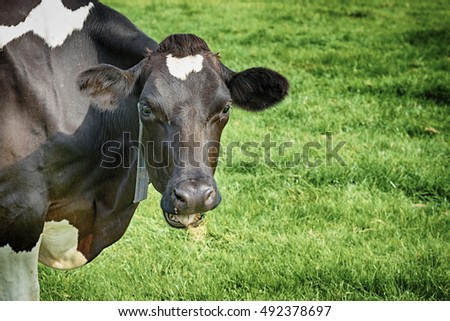 Closeup form a cow