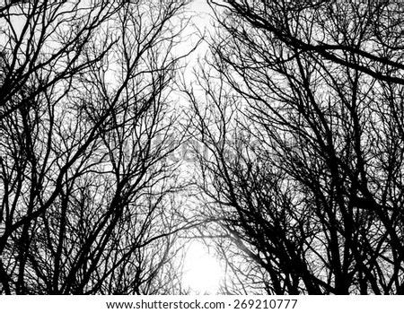 Closeup image of tree branches