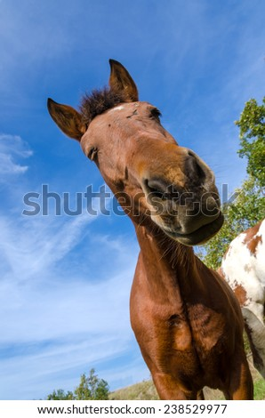 closeup of a horse in a meadow