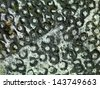 closeup of a surface invaded by mold, with an uneven round texture - stock photo