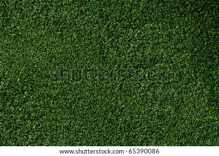 Closeup of grass on a putting green