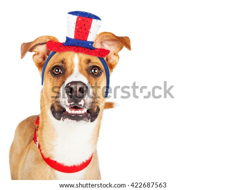 Closeup of large breed dog wearing an American patriotic red, white and blue color hat