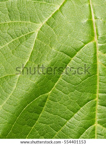 Closeup of leaf texture