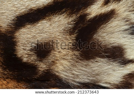 closeup of ocelot fur