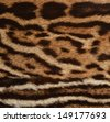 closeup of ocelot spotted coat - stock photo