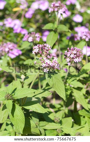 Closeup shot of small pink wild flowers and leaves