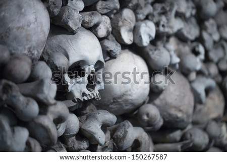 closeup view of a human skull in the ossuary