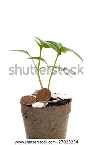 Closeup view of a money tree, isolated against a white background