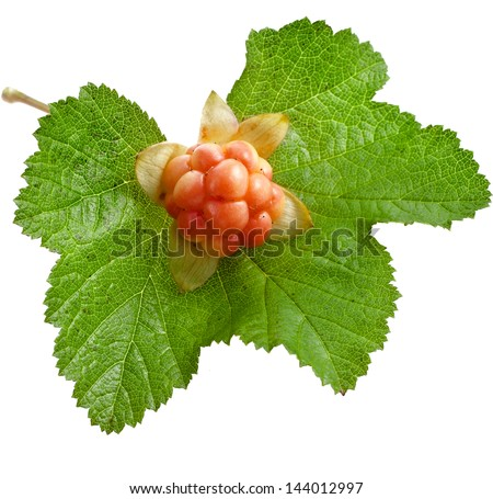 cloudberry one ripe berry close up isolated on white background