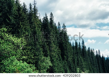 Clouds floating above the forest green and high