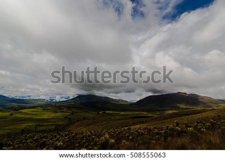 Cloudy landscape and exotic plants