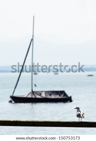 Coastal seagull with parked boat.