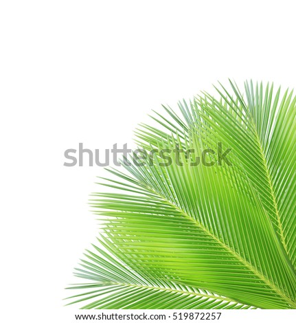 Coconut leaf frame isolated on white background
