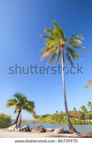 coconut palm tree on beach with blue sky and small lagoon